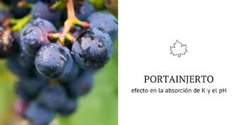 Efecto del portainjerto sobre la acidez y pH del vino
