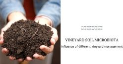 Microbiological and agronomic study of vineyard soils
