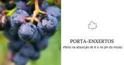 Efeito dos porta-enxertos no pH do vinho