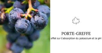 Effet du porte-greffe sur l'acidité et le pH du vin