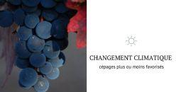 Adapter les régions viticoles au changement climatique en mobilisant la diversité des cépages