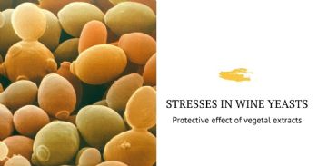 Protective effect of vegetal extracts against acidic and alcoholic stress in wine yeasts