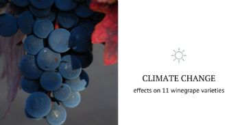 Adapting winegrowing regions to climate change through crop diversification