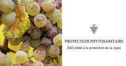 Un nouvel OAD dédié à la protection de la vigne