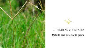 Método para detectar la grama en las cubiertas vegetales que protegen los viñedos