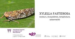 The emerging threat of Xylella fastidiosa to European viticulture?