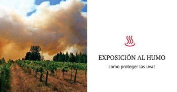 Nueva estrategia para proteger las uvas del humo provocado por los incendios