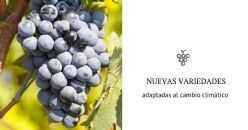 Use of Monastrell crosses for obtaining varieties adapted to climate change