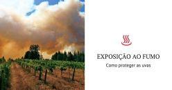 Nova estratégia para proteger as uvas do fumo provocado pelos incêndios
