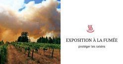 Nouvelle stratégie pour protéger les raisins de la fumée dégagée par les feux de forêts