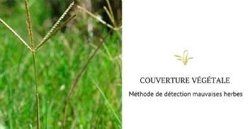 Méthode de détection du chiendent dans la couverture végétale qui protège les vignobles