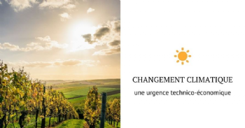 5ª Conferência Vins du Sud-Ouest: atas do seminário online