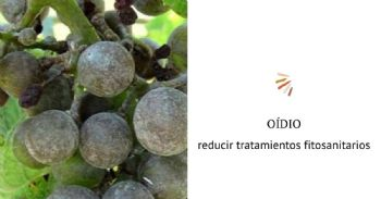 Proyecto Oidio detection: aplicación de modelos predictivos para reducir tratamientos fitosanitarios