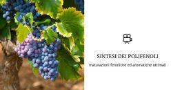 Maturazione Fenolica ed Aromatica: intervenire all'invaiatura per migliorare la qualità delle uve