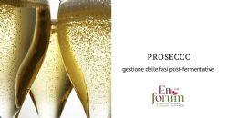 La gestione del lievito nelle fasi post-fermentative: riduzione dell'uso dei solfiti e prolungamento della shelf-life del vino Prosecco