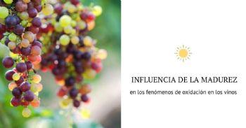 El estado de madurez de la uva determina la aparición de notas de oxidación en el vino