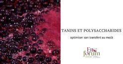 Approches œnologiques pour limiter les interactions entre les tanins et les polysaccharides dans les parois cellulaires des baies de raisin