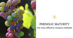 Phenolic Compounds and Phenolic Maturity
