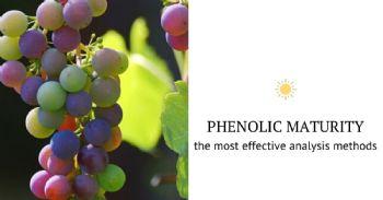 Phenolic Compounds and Phenolic Maturity