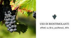 Come avere un alto grado zuccherino, un alto contenuto in polifenoli, APA e altri composti strategici per la qualità finale del vino?