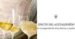 Longevidad de los vinos blancos y rosados: