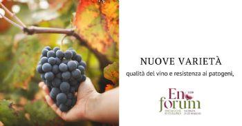 Caratteristiche chimiche del vino prodotto da varietà tolleranti alle malattie