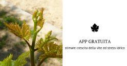 App gratuita per il monitoraggio della crescita della vite e la stima dello stress idrico