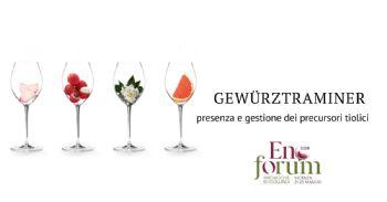 Indagini chimiche e tecnologiche per la valorizzazione dei prodotti enologici di un vitigno autoctono dell'Alto Adige: Gewürztraminer