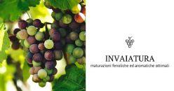 Intervieni all'invaiatura per migliorare maturazione fenolica ed aromatica