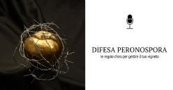 Le regole d'oro nella difesa alla Peronospora