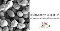 Esplorare la biodiversità microbica per gestire la qualità dei vini: uso di colture starter di lieviti non-saccharomyces e di batteri malolattici in fermentazioni miste