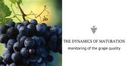 The importance of monitoring the quality of grapes during the ripening phase