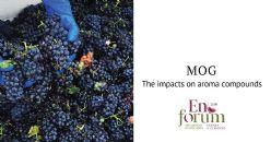 Efeito do Material Other than Grape (MOG - Material que não uvas) nos compostos aromáticos dos vinhos tintos