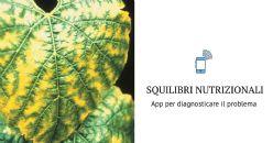 Allo studio una App per valutare e gestire gli squilibri nutrizionali