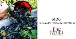 Efecto del material diferente de la uva (MOG) sobre los compuestos aromáticos de los vinos tintos