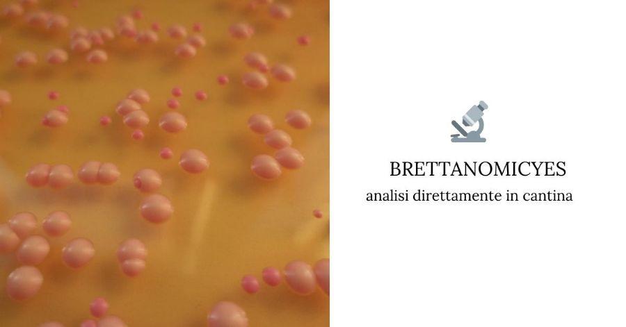brettanomicyes