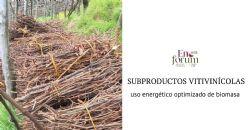 Valorización de subproductos vitivinícolas. De residuo a recurso energético sostenible y de alto potencial