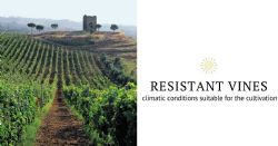 Climate analysis to introduce resistant vines in the protected areas of the Castelli Romani regional park