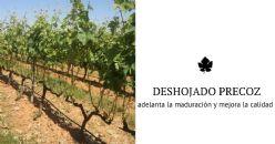 El deshojado precoz en la vid mejora el potencial enológico en los vinos de la variedad Tempranillo