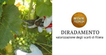 Estratti antiossidanti da uve immature e loro utilizzo nel vino ed altri alimenti