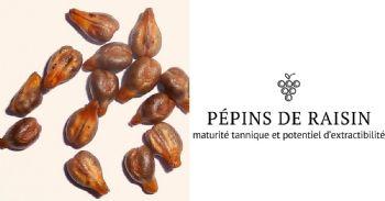 Suivi de la maturation des raisins par scanner