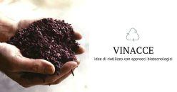 Approcci biotecnologici per dare valore alimentare alle vinacce: le proposte della ricerca e l'interesse dei consumatori e delle aziende