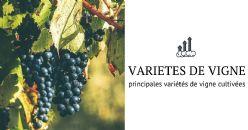 Quelles sont les variétés de vigne les plus répandues et où sont-elles cultivées?