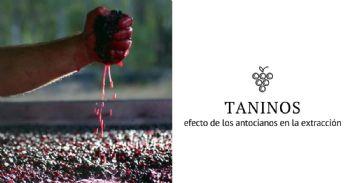 Importancia de los antocianos en la adsorción de taninos por los hollejos