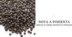 Rotundona, la nota picante se obtiene en el viñedo
