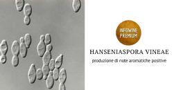 Ruolo metabolico del mandelato come intermedio nella biosintesi dei benzenoidi da Hanseniaspora vineae