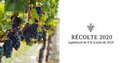 Une production viticole 2020 prévue supérieure à celle de 2019