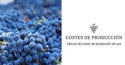 Estudio de costes de producción de uva para la elaboración de vinos en España