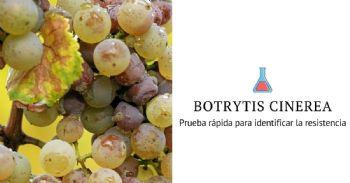Prueba rápida para identificar la resistencia de Botrytis a los fungicidas