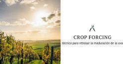 Una aplicación permitirá a las bodegas gestionar mejor las viñas para hacer frente al cambio climático